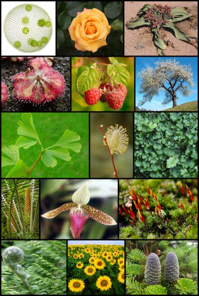 Organismos animales y vegetales  Educación para la vida